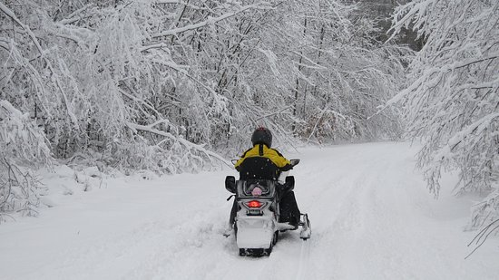 200 miles of Snowmobile Trails in National Forest west of Cadillac