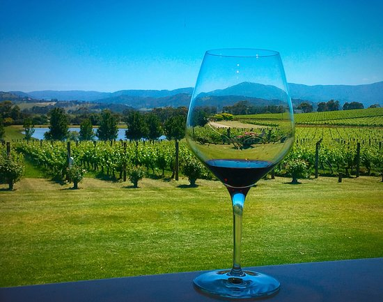 Coldstream, ออสเตรเลีย: View from the tasting room