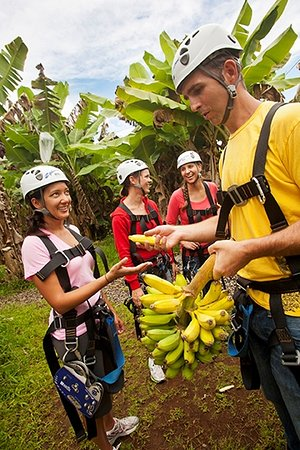 Skyline Eco Adventures - Akaka Falls: Bananas