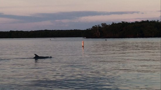 North Palm Beach, Floryda: Dolphins on a sunset paddle board tour to Munyon Island