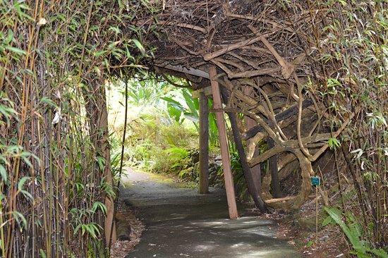 Grounds Of Kula Botanical Garden