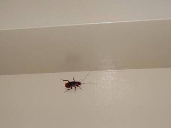 Mackay, Australien: Bloody band aids in pool cockroaches in the rooms smashed eggs ? Weird