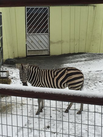Kushiro City Zoo
