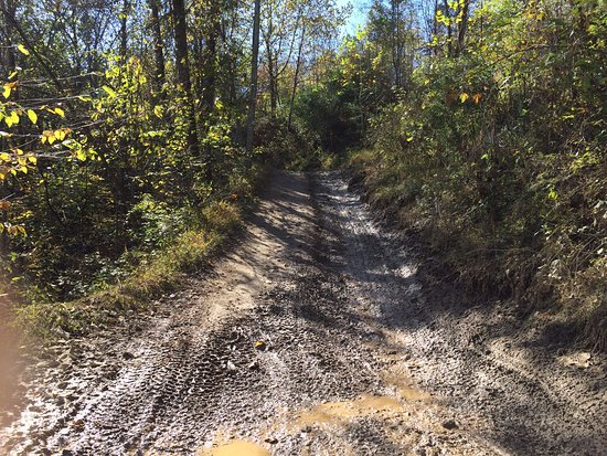 Rockhouse Trail System, Hatfield and McCoy Trails: Nice part of the trail