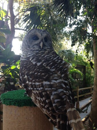 Zdjęcie Peace River Wildlife Center