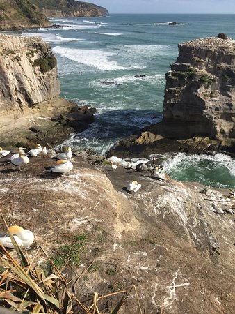 Muriwai Beach, New Zealand: photo3.jpg
