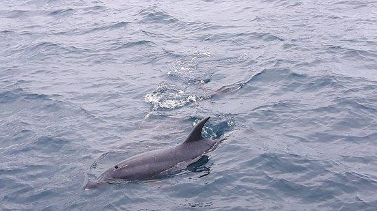 เปเฮีย, นิวซีแลนด์: Dolphin's