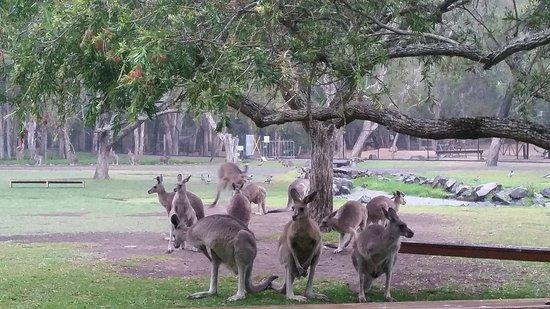 Currumbin, Australia: 20161201_162713_large.jpg