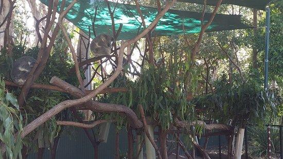 Currumbin, Australia: 20161201_141838_large.jpg