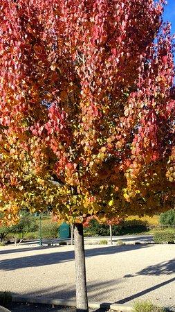 Geyserville, CA: árvore do caminho de entrada