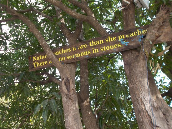 lovely quotes Picture of Gir Lions Paw Resort with
