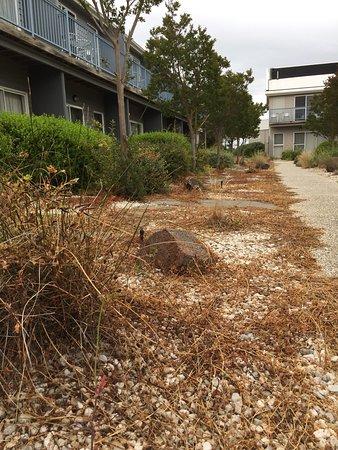 Williamstown, Австралия: photo1.jpg