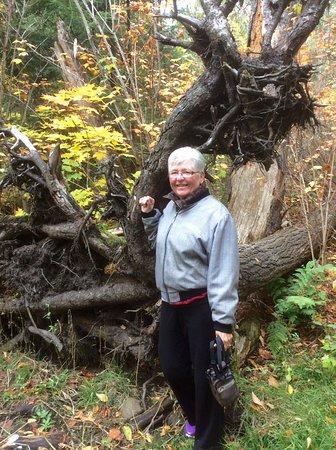 Whitney, Canada: Bear trail