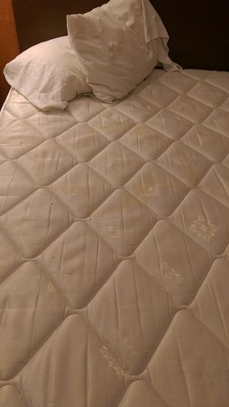 Forest Lake, MN: Pee stained mattress, no bedding
