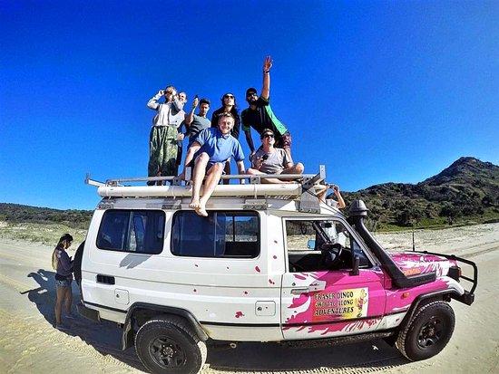 Urangan, Australia: Fraser Dingo! To the infinite and beyond!