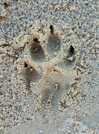 Urangan, Australia: You might see a dingo!... Or realise one was around :0