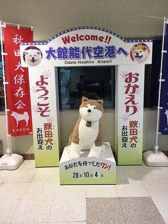 Kitaakita, Ιαπωνία: 秋田犬のお迎え