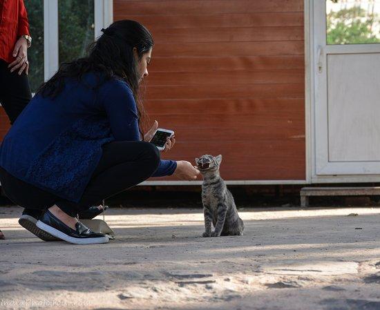 india photo tour a girl feeding a cat