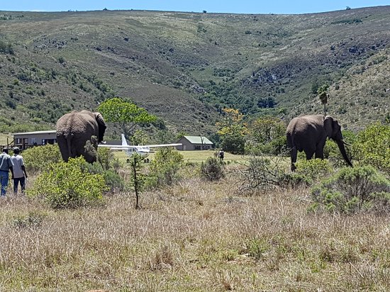 Аддо, Южная Африка: Suedafrika2016 (126)_large.jpg