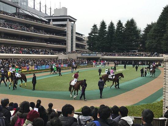 Fuchu, Japon : Parade ring