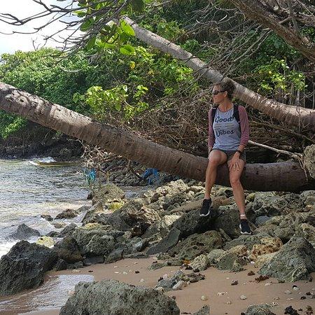 Saint Michael Parish, Barbados: Island Safari
