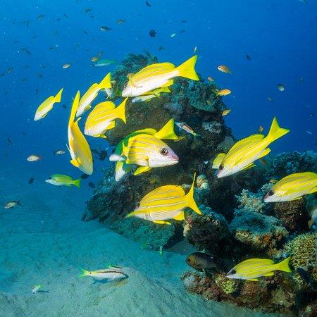 Hotel Coral Sun Beach Resort : Underwater