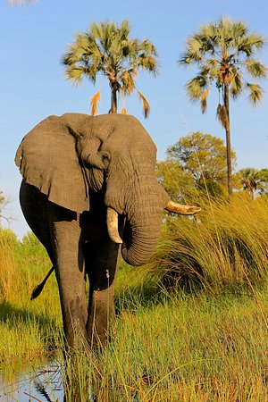 Maun, Botswana: Located near Gunn's Camp in the Okavango Delta.