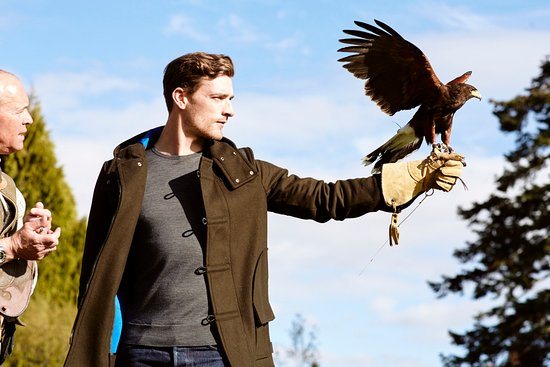 Auchterarder, UK: A Falconry Lesson at Gleneagles
