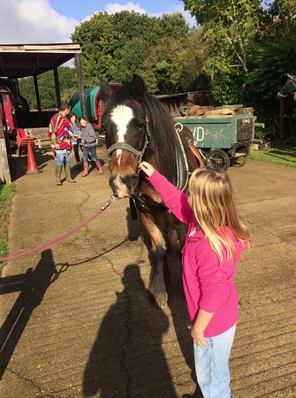 Verwood, UK: Dorset Heavy Horse farm park