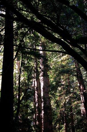 Mill Valley, CA: Sunlight shines through