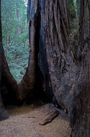 Mill Valley, CA: Old and Strong