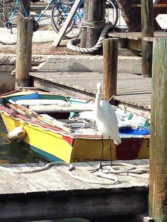 Cortez, FL: Star Fish Dock.
