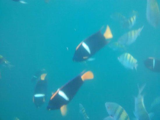 Variedad de peces picture of los arcos puerto vallarta for Variedad de peces