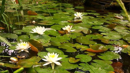 Westampton, NJ: Dragonfly Pond