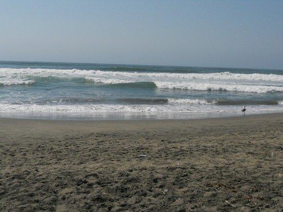 ocean beach near sf zoo