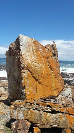 Plettenberg Bay, Sydafrika: Ironed rocks