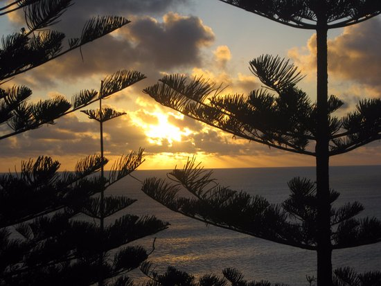 Isla Norfolk, Australia: Norfolk Pines and the sunset.