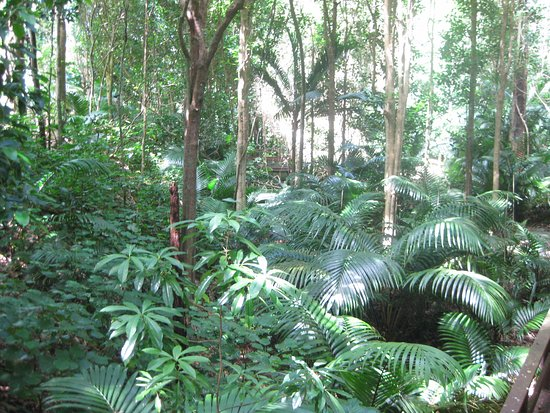 Isla Norfolk, Australia: A photo of the plants taken from one of the many boardwalks.