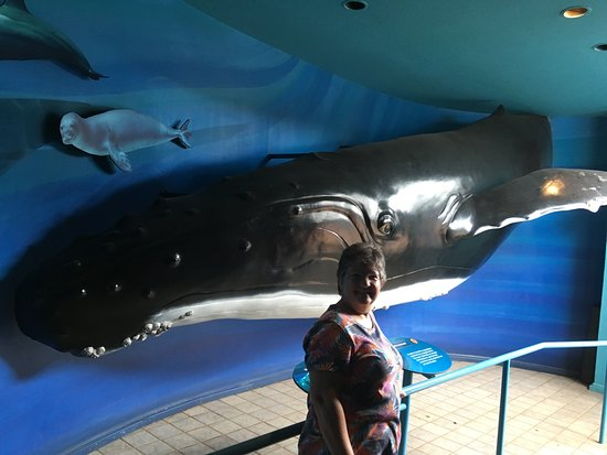 Wailuku, HI: I love humpback whales so had photo at Maui Ocean Center exhibit