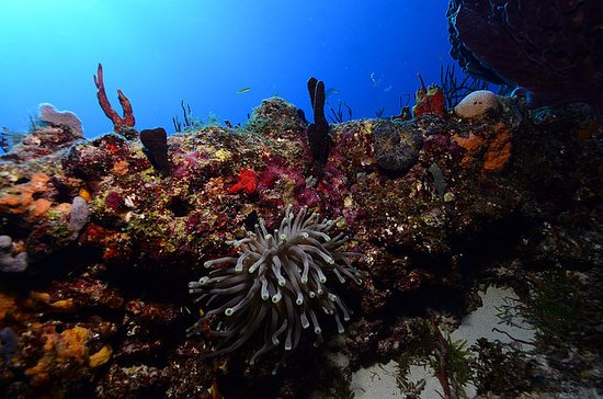 bahía de Simpson, St. Maarten: Awesome Marine life