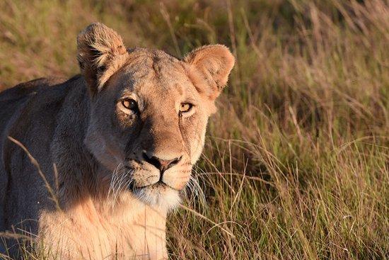 Foto de Addo Elephant National Park