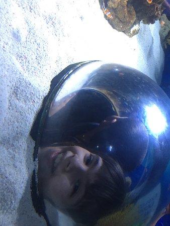 Underwater World Sea Life Mooloolaba: photo2.jpg