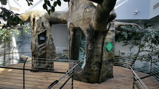 Museum of Arts and Sciences: Inside live animals
