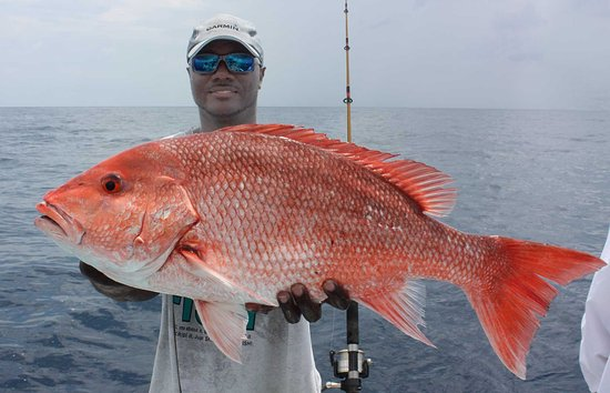 red snapper www captlarrymcguire blogspot com like show me the