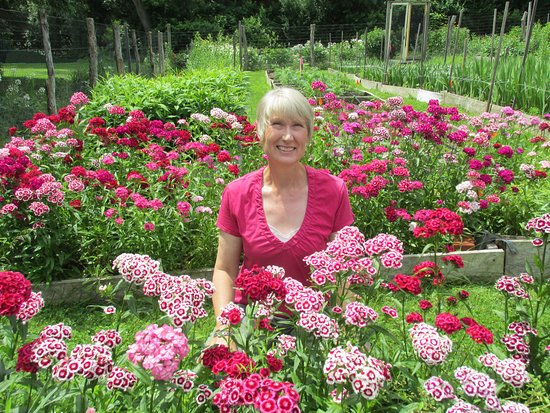 Take Your Pick Flower Farm: Sweet Linda among the Sweet William.