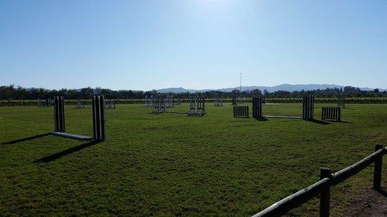 Santa Cruz, Chile: Equestrian fields at Viu Manent