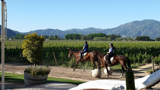Santa Cruz, Chile: Guests taking horses out for ride at Viu Manent