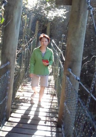 Canungra, Australia: Boardwalk which takes people up into the rainforest canopy