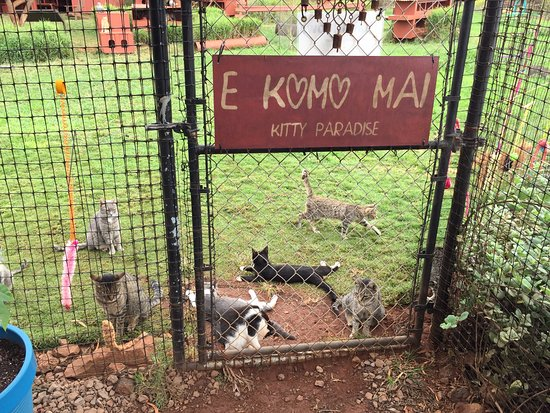 Lanai City, HI: Cats waiting for visitors by the front gate