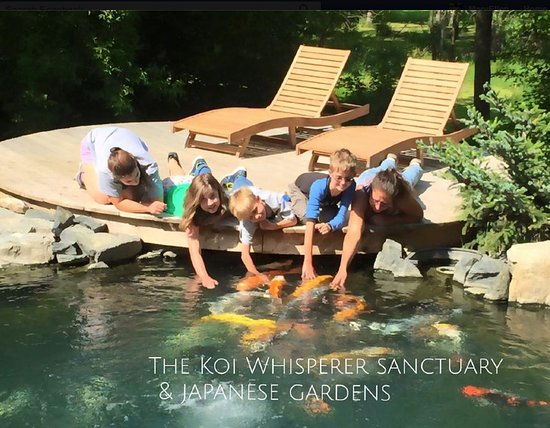 Saint Charles, IL: We love our friends! - The Koi